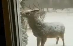 Kışın en güzel videosu. Masal karakteri gibi.