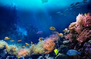 Bilim insanları 2020'yi okyanuslar için en sessiz...