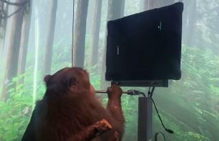 Elon Musk yine yaptı yapacağını: Maymun beyin...