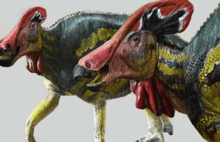 Meksika'da 73 milyon yıl önce yaşayan farklı...