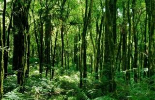 Son 20 yılda canlanan ormanlar iklim krizi için...
